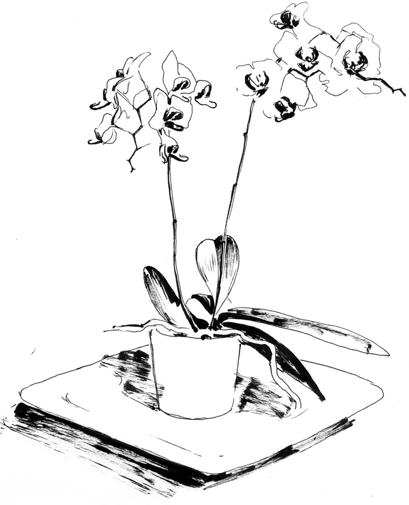 Simple+orchid+drawing